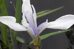 Bloemen (95)